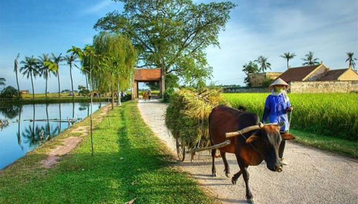 Peaceful countryside Vietnam