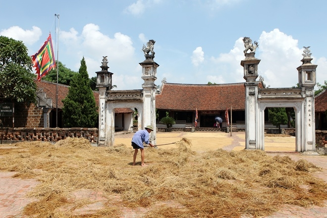 Golden straw cover Duong Lam Ancient Village